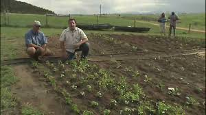 Vegetable Garden Irrigation System - YouTube Sprinkler Systems Diy Good Home Design Gallery And The 25 Best Irrigation Ideas On Pinterest Irrigation System 2013 Veg Box Youtube Drip Basics Make Choosing An System Hgtv Self Watering Square Foot Garden Diy How To An At Golf Course Wedotanks And Tom Farley Land Best Designing A Basic Pvc For Peenmediacom Info Source Big Freeze 5 Things To Think About Before