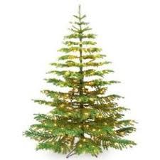 Barcana Noble Fir Ready Trim Christmas Tree With 550 Clear Mini Lights