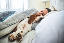 was der schlafstil deines haustieres über eure beziehung verrät