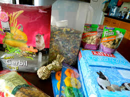 Can Guinea Pigs Eat Pumpkin Seeds by Guinea Pigs The Happy Gerbil
