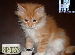 orange cat names great orange cat names for cat appreciation day i