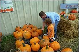 Pumpkin Patch Fayetteville Arkansas by Hicks Family Farms Lonoke Arkansas Attractions