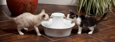 water for cats water bowls and water fountains for indoor cats