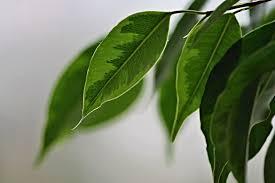 wie wirken sich pflanzen generell auf das raumklima aus