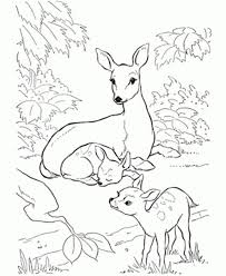 Print Coloring Pages Of Deer Baby Sheets Animal