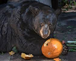 Kidspace Childrens Museum Annual Pumpkin Festival by Best Halloween Events For Kids In Los Angeles Cbs Los Angeles