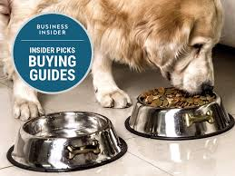Best Type Of Flooring For Dogs by The Best Dog Food Bowls You Can Buy Business Insider