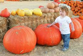 Pumpkin Patch Northern Va by Best Pumpkin Patches In Southern California Cbs Los Angeles