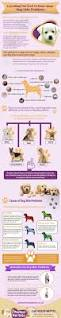 Do Akitas Shed Bad by Hair Loss In Dogs Causes And How To Treat Them