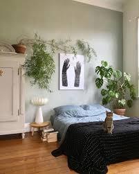 7 luftreinigende zimmerpflanzen sense of home magazin