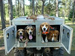 Hunting Truck Dog Boxes | Www.topsimages.com For Sale Uws Northern Dog Box Converted For Storage Trap Hunting Dog Box Dogs Dogs Owens Products Hunter Series Triplecompartment Without Top Coondawgscom Coonhound Classifieds And Message Forum Cutter Bays New Biggahoundsmencom Mountain Custom Kennelsmov Youtube Ukc Forums Built Boxes Tool Storage Alinum Sports Fabrication Seneca Diamond Truck Dans Gear Pick Up Truck The Wooden Workshop Oakford Devon Evans Jones Mi 49061
