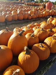 Free Pumpkin Patch In Katy Tx by Pearland Events Pumpkin Patch
