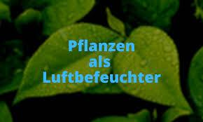pflanzen als natürliche luftbefeuchter reicht das wirklich