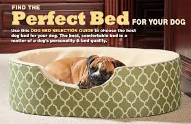 compare drs foster and smith dog beds