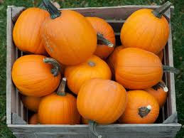 Pumpkin Patch Appleton Wi by Pumpkins 9705cnp Jpg
