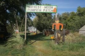 Omaha Pumpkin Patch by Harvest Moon Pumpkin Patch Kat Country Hub