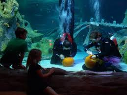 Grapevine Texas Pumpkin Patch by Watch Underwater Pumpkin Carving At Sea Life Aquarium Grapevine