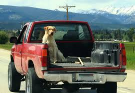 Halifax Man Charged For Letting Dog Roam Free In Back Of Pickup ... Alberta Spca Opens Invesgation After Photos Show Dogs Above Dog Truck Stock Photos Royalty Free Images Travel Hammock Back Seat Cover Protect Your Car Or Is It Legal In Washington To Drive With Your Dog Loose Bed Harness Korrectkritterscom Angry Truck Driver Stock Image Image Of Commuting 35342397 Scania T Rjl Mad Dog Truck Skin 130 Euro Simulator 2 Mods Found Wearing A Jacket What Was The Pocket Led Traveling Pet This Holiday Part 4 Mckinney Animal Tree Roots Tampa Food Trucks Roaming Hunger Facilities Great Of Cute Dogs