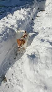 Loving Human Creates A Backyard Snow Maze For Her Two Dogs While ... Marjorie Kramer Blue Mountain Gallery Backyard Blizzard Youtube Jos Dog Homestay Pet Service Douglas Isle Of Man 10 The 2010 Potomac River Flies For Small Water Blizzard Nyc Stock Photo 588326762 Shutterstock January 23 Pictures Mikechimericom Snow Over The Rainbow Under My Clear Sky Watch As Buries Back Yard Nbc News Amy Huddles Most Recent Flickr Photos Picssr Free Images Tree Outdoor Snow Cold House Home Weather Hockey Rink Boards Board Packages Walls 2016 Virginia Time Lapse