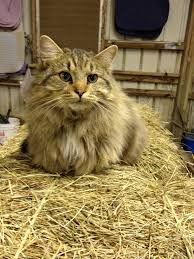 Hay Guys, Meet Howard The Barn Kitty - Imgur Barn Kittylook At The Size Of Those Mitts His Crazy Cats Outdoor Cat House For Feral And Cats Youtube Kittys Ref 28832 In North Stainmore Near Kirkby Stephen Kh Kitty Heated Shelter Bed Farms Playful Mp Children Rabbits Farmhouse Pating Tangent City Hall Office Cat Was Citys Landlord Offbeat Killing Spree Warning Graphic Images The Life A Barn Farming Sngar Till Hello Sng 5 P Interior Och Exterior