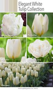 43 best around the house flower bulb inspiration images