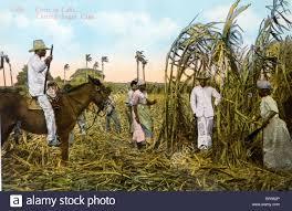 Cuba Cuban Cutting Sugar Cane Painting 1930