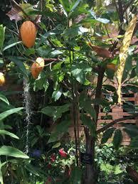 Matthaei Botanical Gardens Wednesday Activity Review