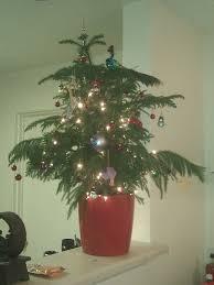 5ft Christmas Tree Walmart by Small Christmas Trees Walmart Christmas Lights Decoration