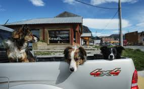 100 Truck Dog Bill Would Ban Unrestrained Dogs In Pickup Truck Beds Post On Politics