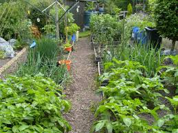 I Have Often Wished That More Gardeners Shared Their Large ... 38 Homes That Turned Their Front Lawns Into Beautiful Perfect Drummondvilles Yard Vegetable Garden Youtube Involve Wooden Frames Gardening In A Small Backyard Bufco Organic Vegetable Gardening Services Toronto Who We Are S Front Yard Garden Trends 17 Best Images About Backyard Landscape Design Ideas On Pinterest Exprimartdesigncom How To Plant As Decision Of Great Moment Resolve40com 25 Gardens Ideas On