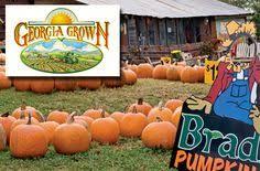 Burts Pumpkin Farm 2015 by Burt U0027s Pumpkin Patch Near Amicalola Falls Ga Fell In Love