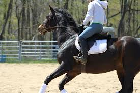 Best Horse Shedding Blade by News Amateur Equestrian