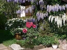 pivoine herbacee en pot le jardin de maman le scrap de céline
