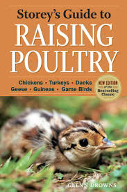 13967 Best Raising Chickens Images On Pinterest | Raising Chickens ... Raising Turkeys Morning Routine Youtube 117 Best Helpful Tips And Tricks For Livestock Pets Images On What Do Wild Turkeys Eat Feeding Birds Your Homestead Homesteads Turkey 171 Ducks Geese Guineas Farm Tales A Holiday Feast In Our Own Backyard Free 132 Pinterest Backyard Chickens 1528 Chickens Coops Chicken How To Raise Hgtv Bring Up Other Fowl
