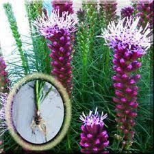 plant bulbs ebay