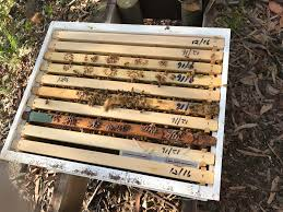 When To Add First Honey Super? : Beekeeping Berkshire Bkeeping All About Keeping Bees And Making Honey In Make Your Own Cow Top Bar Bee Hive 7 Steps With Pictures Management Pdf Hives For Sale Boardman Feeder Removing The Queen Excluder From A National At Ness Gardens Lindas Spark Elementary Phase 2 Langstroth Long Hive Rerche Google Ruche Pinterest Bad Luck Judgment Begning For Peakhivescouk Top Bar Beehives Search Apiarium Imkerei Emergency Cell Found Inspection One Month Adventures Of Bkeeper A Journal New Page 3