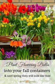 preparing fall bulb planters for large containers bulbs