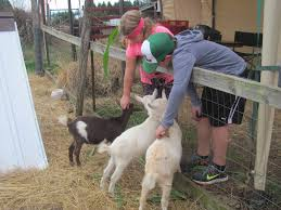 Pumpkin Patch With Petting Zoo by Pumpkins A Plenty Camas Washougal Post Record