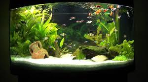 aquarium d eau douce aquarium d eau douce planté aquascape aquascaping 4