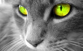 warrior cat waterclan warrior cats images glowpaw hd wallpaper and