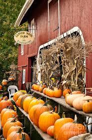 Chesterfield Berry Farm Pumpkin Patch 2015 by 39 Best Halloween Thanksgiving Fall Pumpkin Farms U0026 Patches