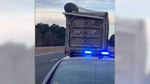 100 Dump Truck Jobs In Nc Bear Spotted Hanging Off Dump Truck On A North Carolina Highway