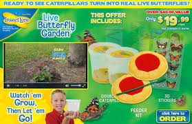 Live Butterfly Garden Review Does It Work