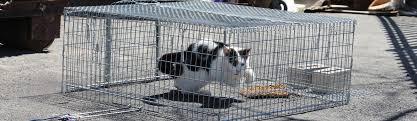 live cat trap neighborhood cats how to tnr drop traps