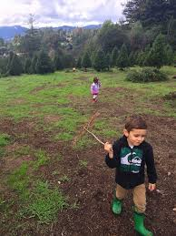 Santa Cruz Mountains Christmas Tree Farms by A Holly Jolly Weekend Fit Mama Love
