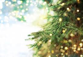 Plantable Christmas Trees For Sale by How To Care For A Live Potted Christmas Tree Planet Natural
