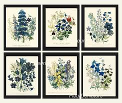 Amazon.com: Botanical Print Set Of 6 Prints Unframed Antique Blue ... 6 Ways To Set Up A Gallery Wall Star Wars Pbteen Home Decor Collection Ewcom 107 Best Art Images On Pinterest Pottery Barn Framed Knock Off Archives Page 3 Of 7 So You Think Youre Crafty Window Shopping And Writers Notebooks Three Teachers Talk Mirror Tv Cover Amlvideocom I Thought This Is Such Neat Idea For Your Gallery Wall A Little Barn Fall 2016 Catalog 8485 Chip Joanna Efedesigns Amazoncom Botanical Print Prints Unframed Antique Blue