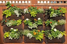 Woolly Pocket Orange And White LIving Wall Garden