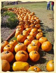 Pumpkin Patch Donnellson Iowa by 52 Best Agritourism Images On Pinterest Pumpkin Patches Corn