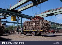 Trucks Loaded With Raw Sugar Cane Delivering To Sugar Mill; Bais ... We Werent Sure If This Valyrian Steel Burning Man Art Car Really 1934 Steelcraft Pressed Delivery Toy Truck New Used Work Trucks Suvs And Cars Near Beaverton Oregon Best Iben Trucks Beiben 2942538 Dump Truck 2638 2ce820028a01d97d0d7f8b3a4c Ford Pinterest Chevrolet Thennow 2 Which Alternative Fuel Should You Use In Your 2019 Chevy Silverado Promises To Be Gms Nextcentury Bangshiftcom Pittsburgh World Of Wheels 2018 Photo Coverage Show Nose Rmodel This Was A Ny City Only Handful Them Diamond T Advertising 56 Years Story Book Brochure Ads